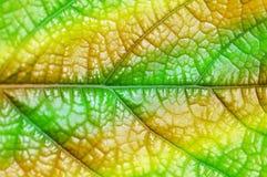 Конспект макроса лист Стоковые Изображения RF