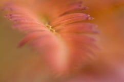 Конспект природы - мягкая нерезкость цвета осени Стоковое Изображение RF