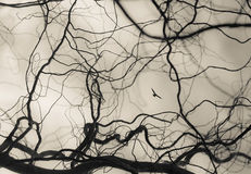 Конспект разветвляет предпосылка с птицей Стоковая Фотография RF