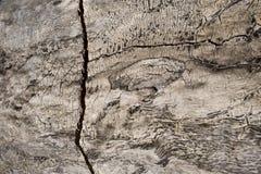 Конспект старого ствола дерева Стоковое Изображение