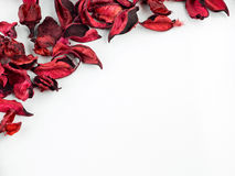 Конспект с высушенными красными лепестками на белой предпосылке Стоковая Фотография