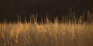 Конспект травы прерии панорамный Стоковая Фотография RF