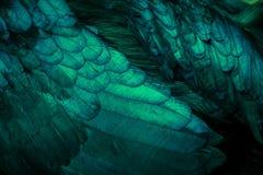 Конспект цвета бирюзы пера цыпленка как предпосылка Стоковые Фото