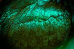 Конспект цвета венисы зеленого цвета пера цыпленка как предпосылка Стоковые Изображения