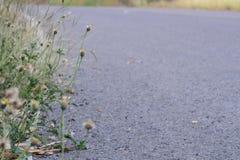 Конспект цветка и дороги стиль взгляда винтажный Стоковые Изображения
