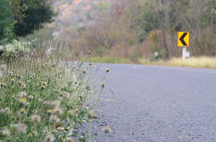 Конспект цветка и дороги стиль взгляда винтажный Стоковые Фотографии RF