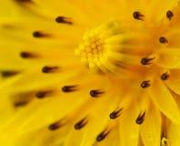 Конспект цветка. Стоковая Фотография
