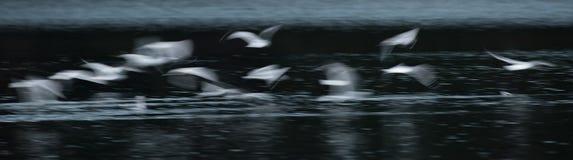 Конспект чайки летания стоковое изображение rf