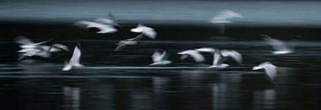 Конспект чайки летания стоковые фотографии rf