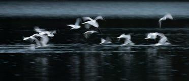 Конспект чайки летания стоковая фотография