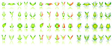 конструирует флористическое Стоковое Фото