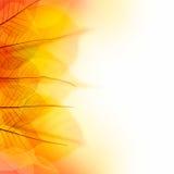 Конструируйте границу листьев цвета осени сухих на белой предпосылке Стоковые Фото