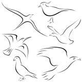 конструкции птицы иллюстрация штока
