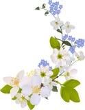 конструкция вишни цветет жасмин Стоковые Изображения