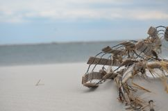 Конструкция на пляже стоковое изображение rf