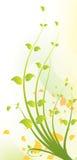 конструкция флористическая Стоковое Изображение