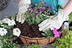 Консультация девушки засаживая корзину смертной казни через повешение цветков стоковое фото