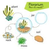 Консультация как сделать florarium Succulents внутри стеклянного terrarium, элементы для florarium: опарник, завод, утесы, мох, п стоковая фотография