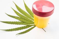 Контейнер медицинской лаборатории с пробой мочи отдыхает на зеленых листьях засорителя марихуаны Концепция фото для determin визу стоковое фото