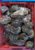 Контейнер с cockleshells на уличном рынке, острове Пхукета Стоковое Фото