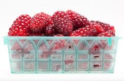 контейнер ягод стоковое изображение rf