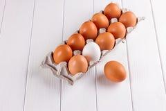 Контейнер 10 яичек Белизна яичка коричневого цвета одного 9 яичек Стоковая Фотография