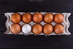 Контейнер 10 яичек Белизна яичка коричневого цвета одного 9 яичек Стоковое Изображение RF