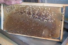 Контейнер для раскрывая клеток Выпущенный пустой сот Стоковое Фото