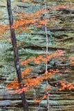 Контрасты каньона Стоковые Изображения RF