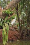 Контраст белой птицы садился на насест посреди зеленого цвета ` s природы стоковые фото