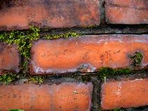 Контраст зеленой и красной, природы и прогресса Стоковая Фотография RF