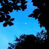 Контраст неба Стоковые Изображения