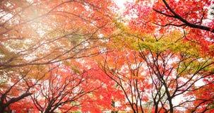 Контраст разрешения осени в Японии Стоковые Изображения