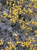 Контраст цветка Стоковое Фото