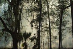 Контролируемый дым ожога Стоковые Изображения RF