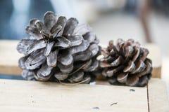 2 конуса сосны на деревянном Стоковые Фотографии RF
