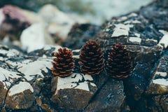 3 конуса сосны на камне Стоковое Изображение