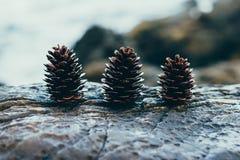 3 конуса сосны на камне Стоковая Фотография