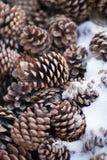 Конусы ели в снеге Стоковое фото RF