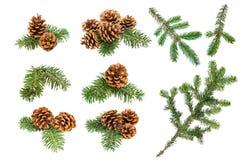 Конусы и ветви сосны рождества стоковое изображение