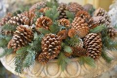Конусы кедра и coniferous ветви стоковые изображения rf