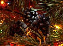 Конусы на праздничном дереве Стоковые Фото