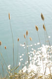 конусы предпосылки голубые сушат море Стоковые Изображения
