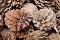 Конусы сосны на рынке цветка Стоковые Фото