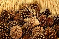 Конусы сосны для дома Стоковое фото RF