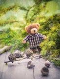 Конусы хвой плюшевого медвежонка рождества приходя зеленые Стоковое Изображение RF