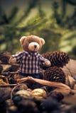 Конусы хвой плюшевого медвежонка рождества приходя зеленые Стоковые Изображения