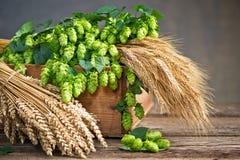 Конусы хмеля ячмень и пшеница стоковые фото