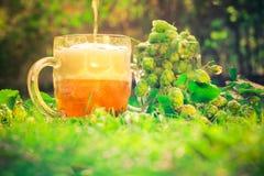 Конусы хмеля стеклянной кружки польностью зеленые Стоковая Фотография
