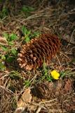 Конус на поле леса Стоковое Фото
